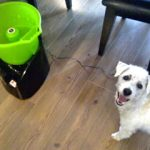 Lanzador de pelotas automatico para perros