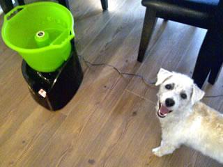 Lanzador- de -pelotas- automaticos- para -perros