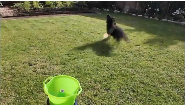 Lanzador- de -pelotas- automaticos- para -perros-juguetones
