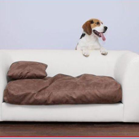 sofa-para- perros- toffy- polipiel