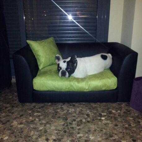 Sofas- para- perros -bulldog- frances