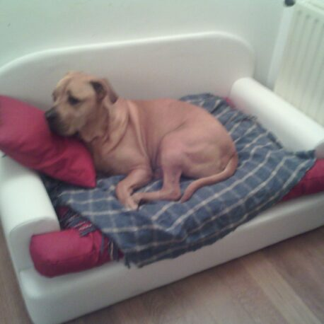 sofa -para- perros-dogo-modelo- Borrys