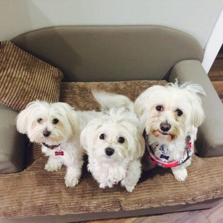sofa -para- perros-modelo- Borrys