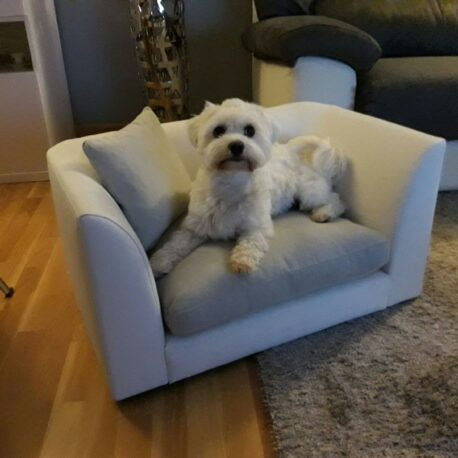 Sofas para perros Modelo Toffy