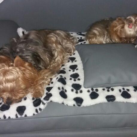 Sofas para perros ModeloBorrys