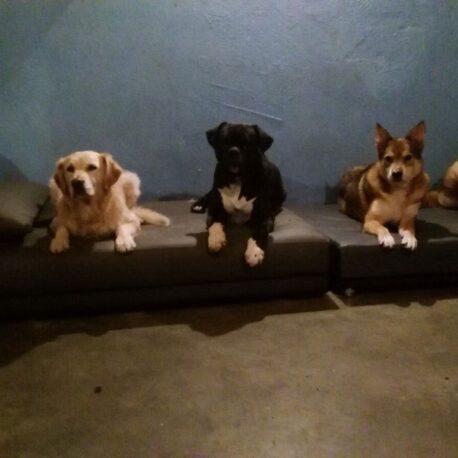 Camas tapizadas en polipiel para perros