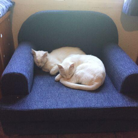sofa- para- gatos- tapizado -en- tela- borrys