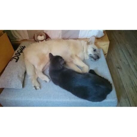 camas-tapizadas-para perros-Dogui