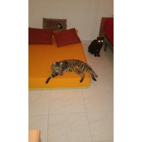 camas-tapizadas-para perros-y- gatos