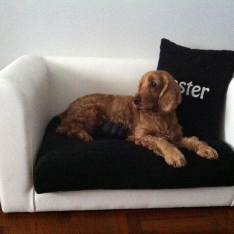 Sofas- para- perros  -coocker- spaniels