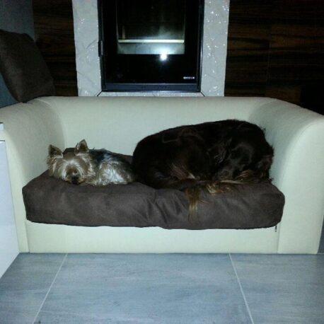 sofas- para- perros -toffy