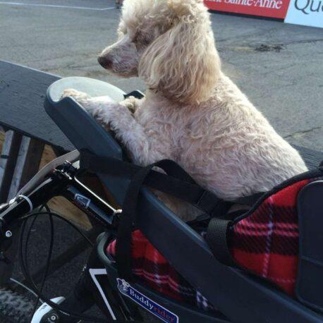 silla- de- bici -para- perro – mediano