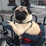Sillin de bici para perros pequeños