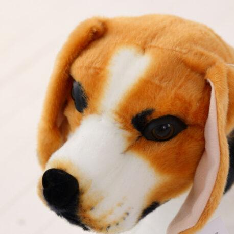 beagle4