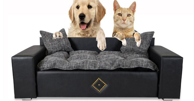 dog y cat