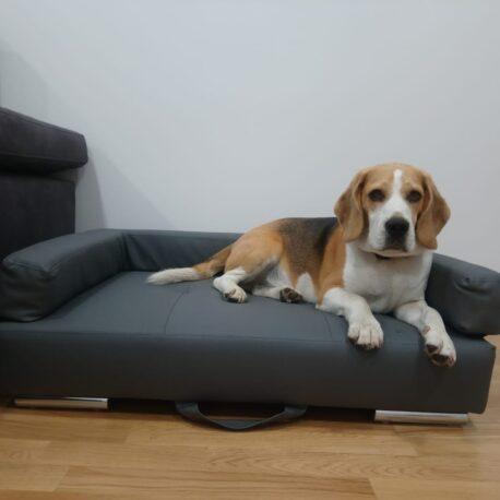 cliente beagle