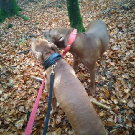 collar de cuero con asa para perros