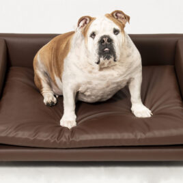 Modelo Coral- Sofas-para-perros