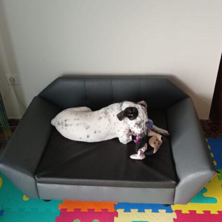California-negro-sofas-para-perros