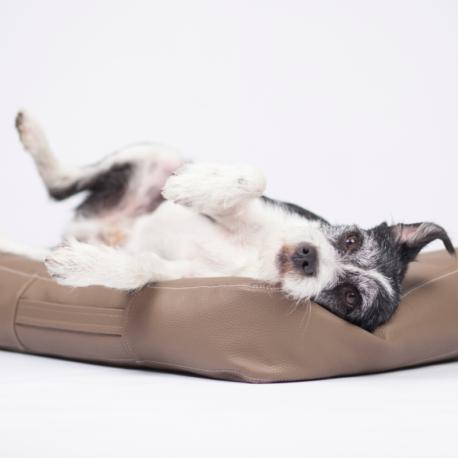 colchon marron perros2.jpg