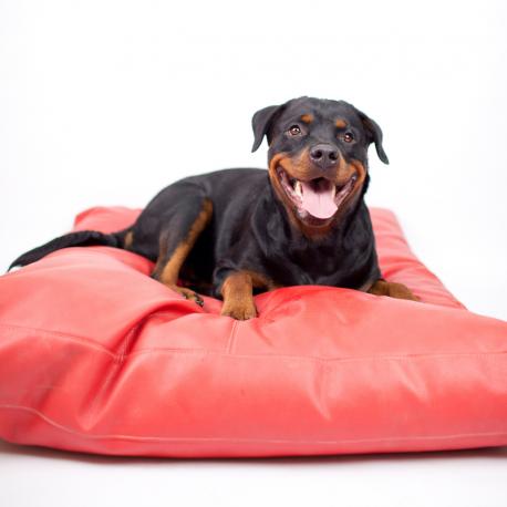 colchon rojo perros2.jpg