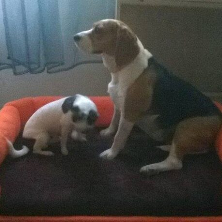 cama perro08