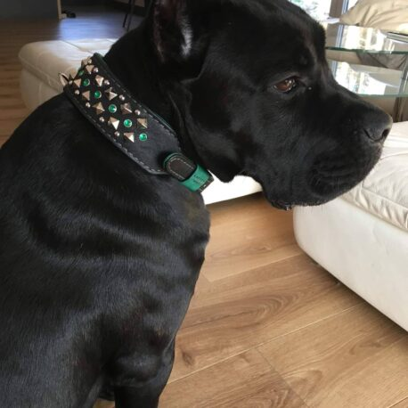 Collar perro Modelo AVATAR01